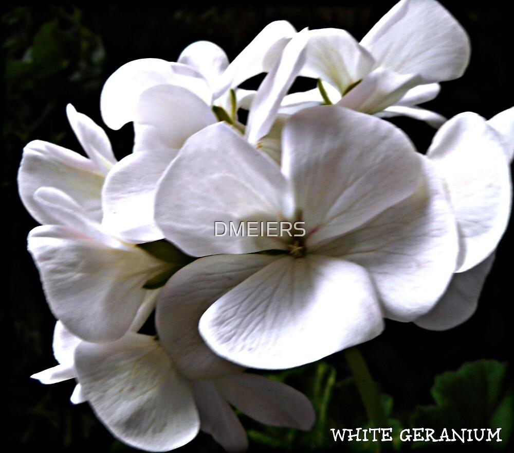 WHITE GERANIUM by DMEIERS