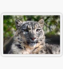 Snow Leopard Transparent Sticker