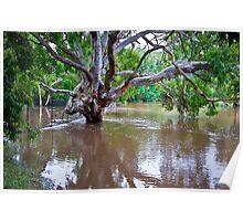 Wet Gum Tree - Queenspark Geelong Poster