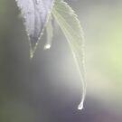 Rain, Rain, Go Away... by Aimee Makeham