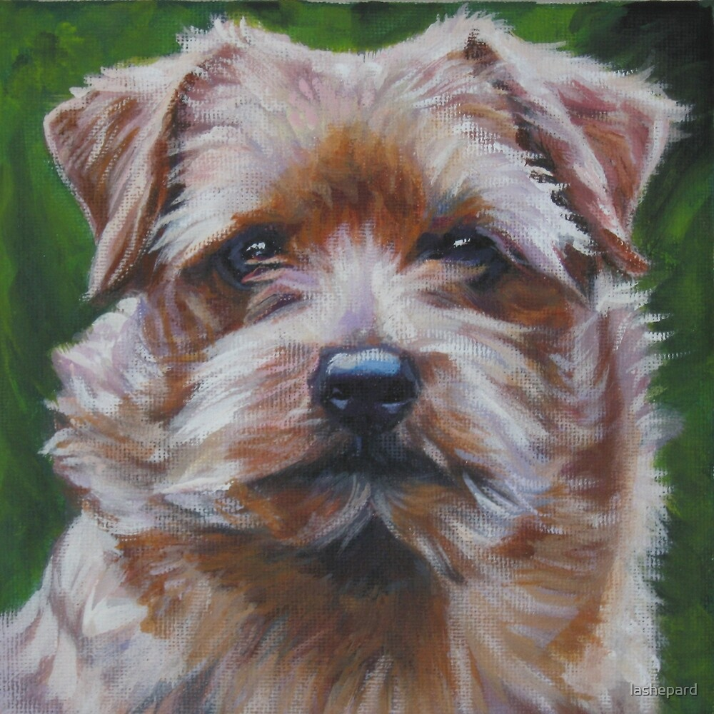 Norfolk Terrier Fine Art Painting by lashepard