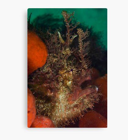 Tasseled Anglerfish Canvas Print