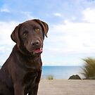 Jake By The Water by { wetnosefotos.com  }