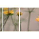 Yellow Flowers by Anne Staub