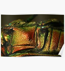 Colorfull Carapace. Poster