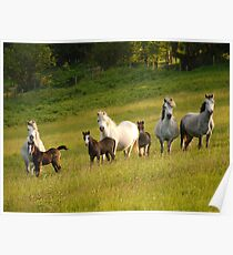 Mares & Foals Poster