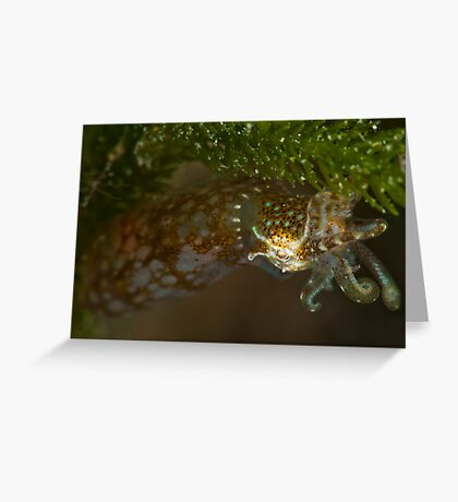 Southern Pygmy Squid Greeting Card