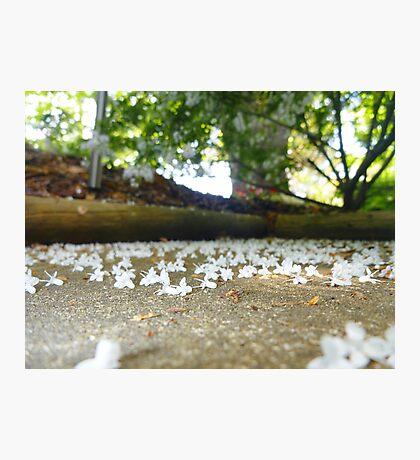 Fallen Flowers Photographic Print