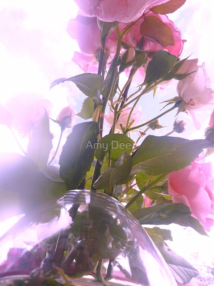 Pink Roses of Love by Amy Dee