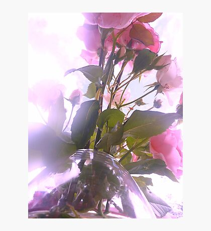Pink Roses of Love Photographic Print