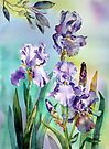 Irises and Eucalyptus by Ann Mortimer