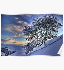 Icy tree Poster
