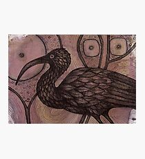 The Ibis Photographic Print