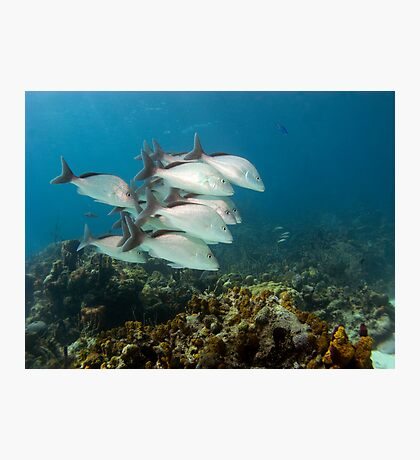 Margate Fish, Nassau, Bahamas Photographic Print
