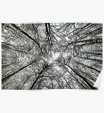 Snowy tree canopy Poster