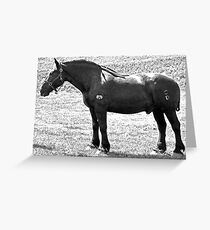 Percheron Stud Greeting Card