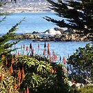 A Peek of the Bay at Lover's Point Park  by Sandra Gray