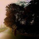 Early Morning Feeling by Judi Taylor