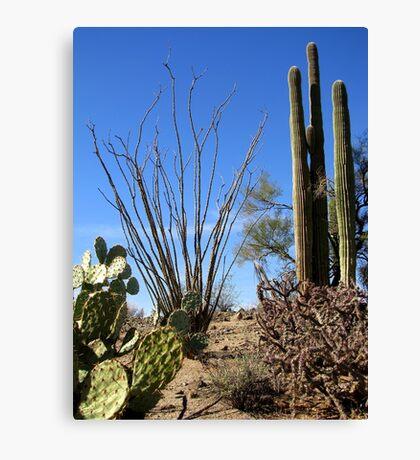 Nature's Cactus Garden Canvas Print