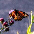 Painterly Flutterbye by Adam Kuehl