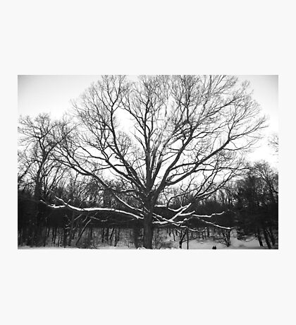 Ghost of Winter Photographic Print