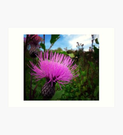 Canadian Thistle  Art Print