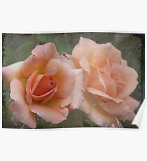 Apricot Roses Poster