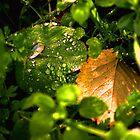 Dew Indeed by lilyblu