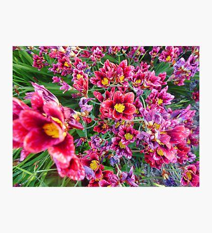 Sea Of Flowers Photographic Print