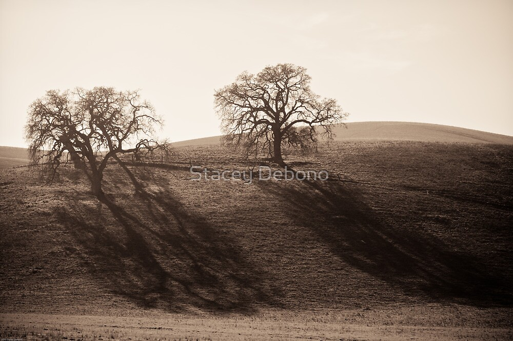 Long Shadows of Winter by Stacey Debono