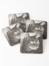 Vintage Tabby Cat Photography Coasters
