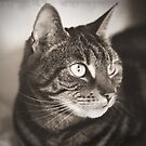 Vintage Tabby Cat Photography by WiseKitty