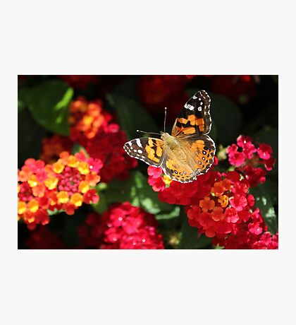 My Friend The Butterfly Photographic Print