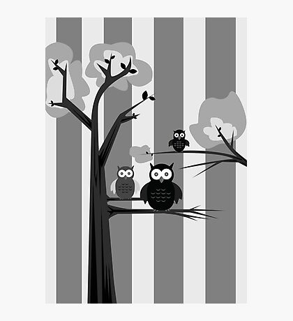 Black & White Owls Photographic Print