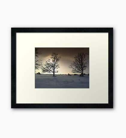 Sunshine and Snowy Trees Framed Print