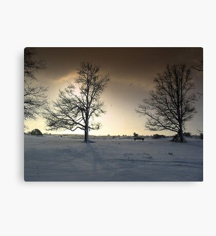 Sunshine and Snowy Trees Canvas Print