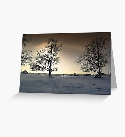 Sunshine and Snowy Trees Greeting Card