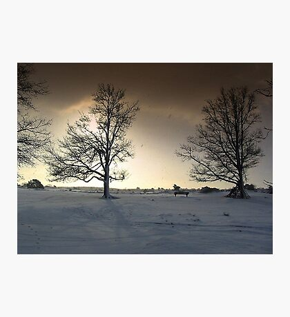 Sunshine and Snowy Trees Photographic Print