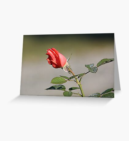 ♥ROSE♥ Greeting Card