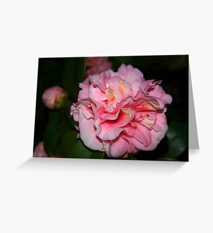 Pink camellia bloom Greeting Card