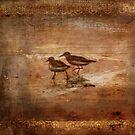 Sanderlings by DottieDees