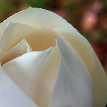 Magnolia by btsculptor