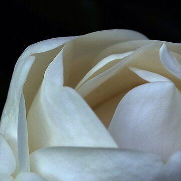 Magnolia 2 by btsculptor