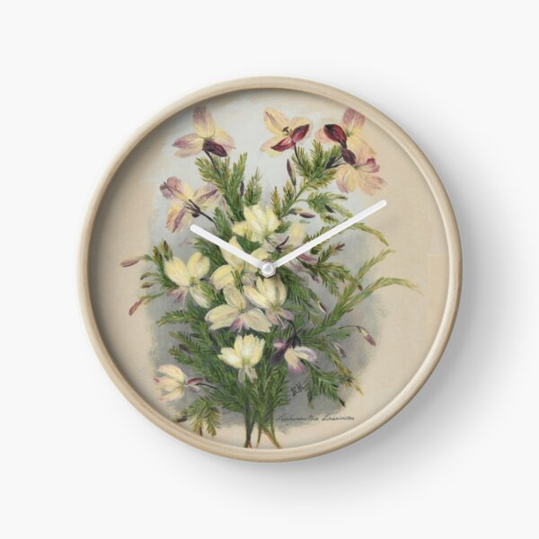 Western Australia wild flower Yellow Leschenaultia - Lechenaultia linarioides State Library of Western Australia Clock