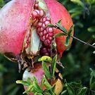 Pomegranate splits by CallinoisArt