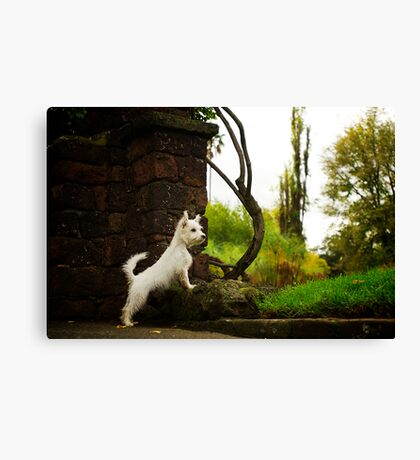 Sheldon Canvas Print