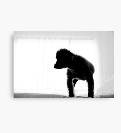 Zack In Silhouette Canvas Print