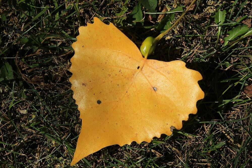 Yellow Leaf on Grass by rhamm