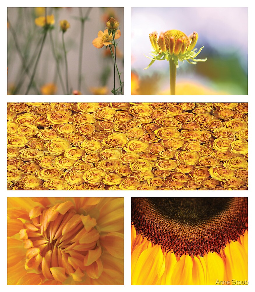 Collection ~ Yellow Flowers by Anne Staub