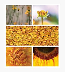 Collection ~ Yellow Flowers Photographic Print